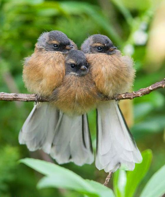 Fathers Love Fledglings