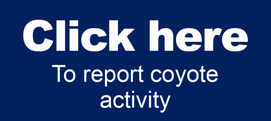 coyote report activity