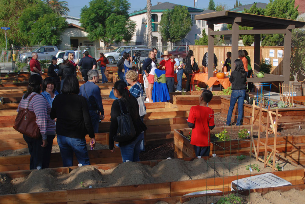Groups of people working on their garden plots
