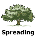 Drawing of spreading tree type