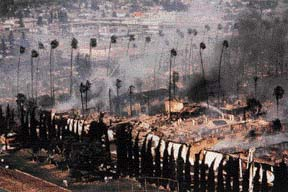 Palm Lane Fire of 1982